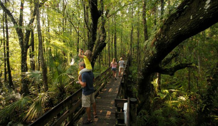 Exploring the great outdoors in a Florida forest